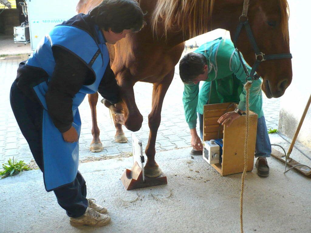 Radiographie antérieur cheval