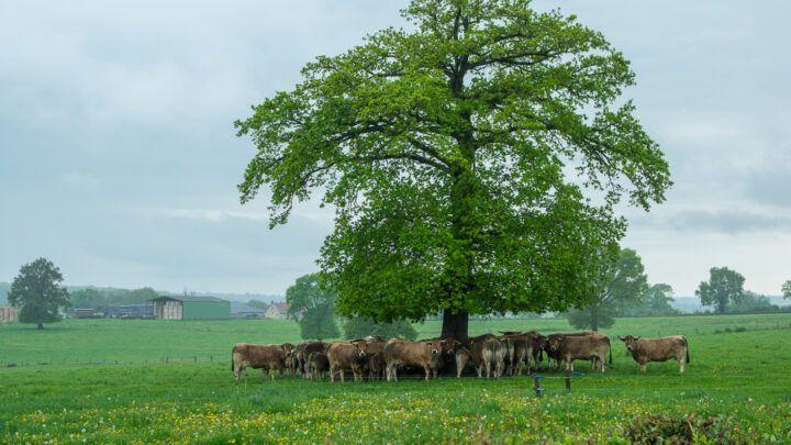 Efficacité et innocuité : évaluer les traitements alternatifs en élevage