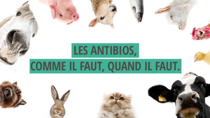 alternative aux antibiotiques